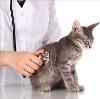 Ветеринарные клиники в Талдоме